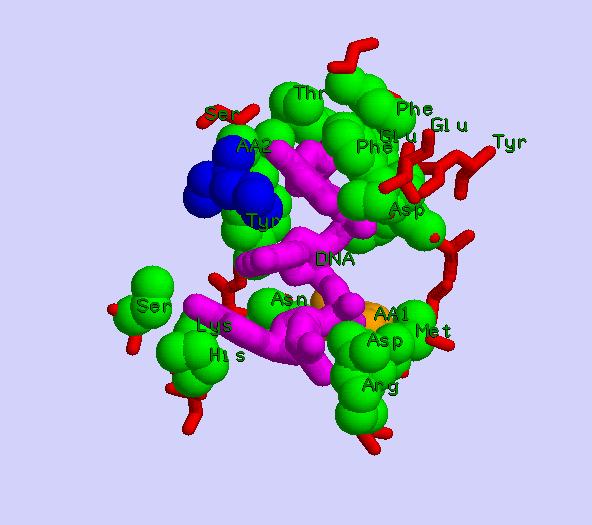 Информация об уникальном, инновационном, не имеющем аналогов, пептиде «Аматокин»