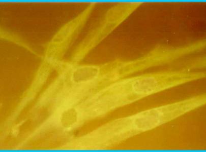 Ох уж эти скандальные стволовые клетки.