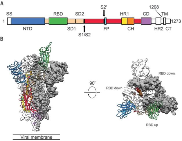 Коронавирус SARS-CoV-2. Методы вакцинации и лечения Coronavirus Disease 2019. Антимикробные пептиды. Полипептиды — биотехнологические рекомбинантные белки. Часть третья.